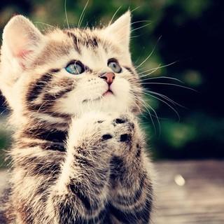 Cat kitten begging legacy square thumb