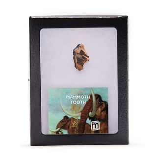 Add on mammoth 1000 legacy square thumb