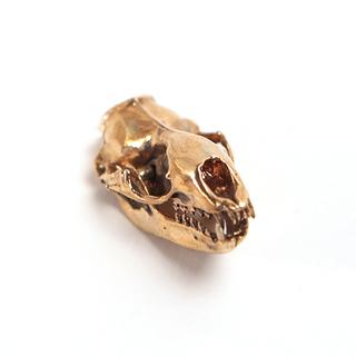 Leopard seal yb legacy square thumb